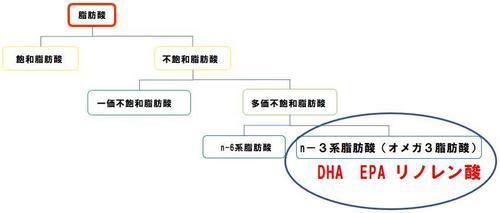 脂肪酸2.JPG