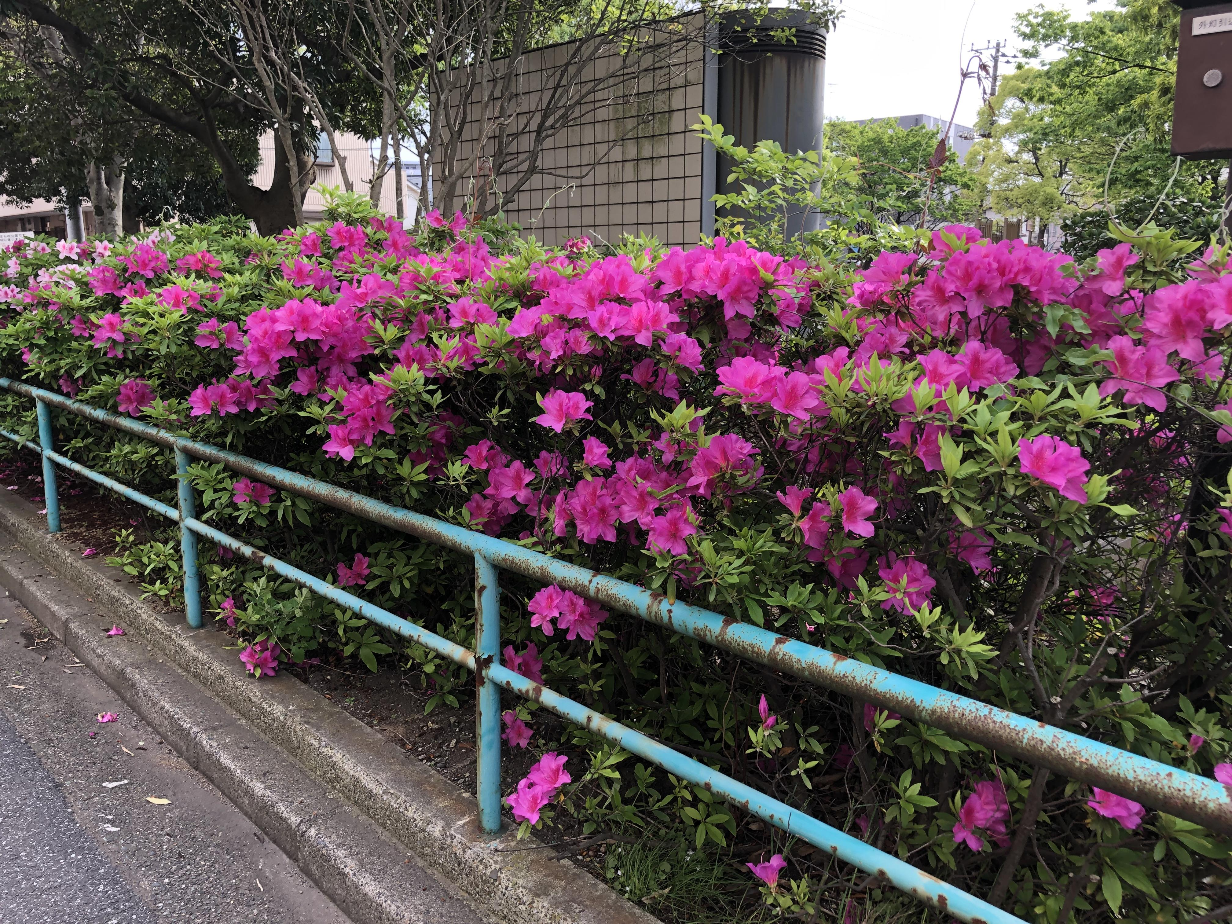 https://www.furusatoen.jp/blog/sanpo/2019/05/IMG_4061%5B1%5D.JPG